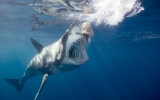 Sharks Face a Growing Threat in Warming and Acidic Seas