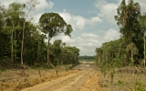 Global Climate Spending Focusing on Forest Protection
