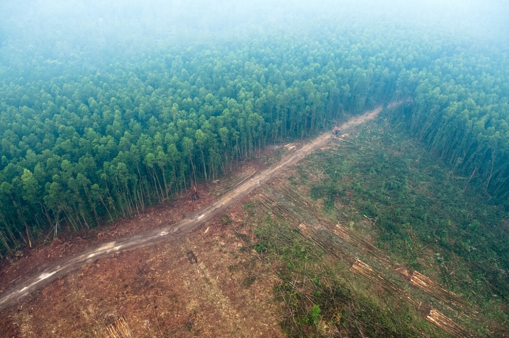 "amazon rainforest issues Deforestation in brazil increased 30% in 12 months, agency says  without dilapidating the amazon rain forest if ""the government was vigilant, if it didn't change the rules but when the ."