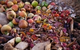 New Jersey Is Cutting Food Waste to Help the Climate