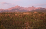 Drought May Stunt Forests' Ability to Capture Carbon
