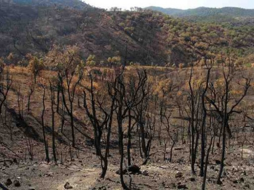 a study on forest fire causes and effects Forest fires are serious problems and have caused enormous social,  a  previous study on spatial differences in fire regimes across the central.