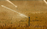 Global Food Crisis Will Worsen as Heat Waves Increase
