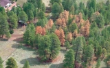 Why Bark Beetles are Chewing Through U.S. Forests
