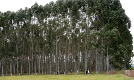 biotech claims gm trees are fuel industry gamechanger