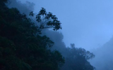 Colombia's Cloud Forests Besieged by Climate Change