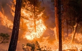 Area Burned By U.S. Wildfires Expected to Double by 2050