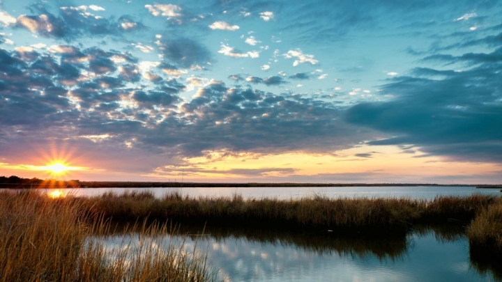 With Co2 Boost Marshes Can Rise To Meet Flood Risks