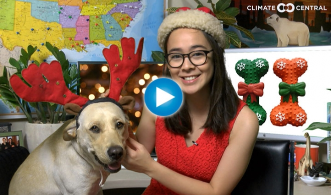 The Shum Show: Where is the Snow?