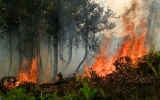 Indonesia's Fires Blamed For Potent Greenhouse Gases