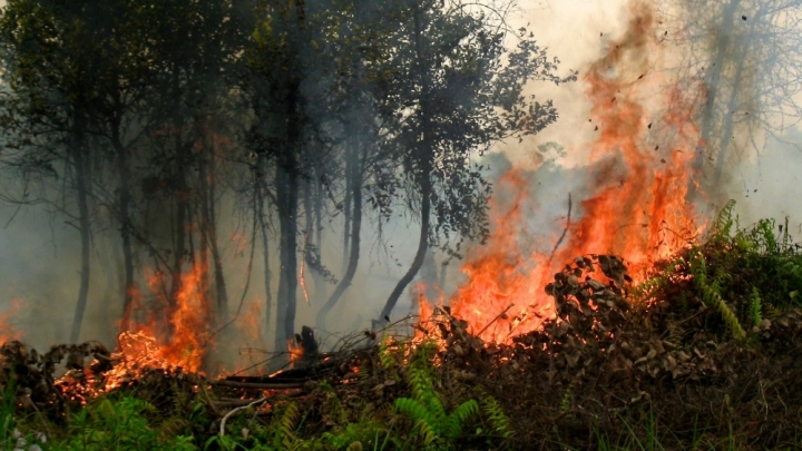 an analysis of the fires of indonesia Jakarta: forest fires in indonesia have been under control this year  based  on satellite analysis by the environment and forestry ministry,.