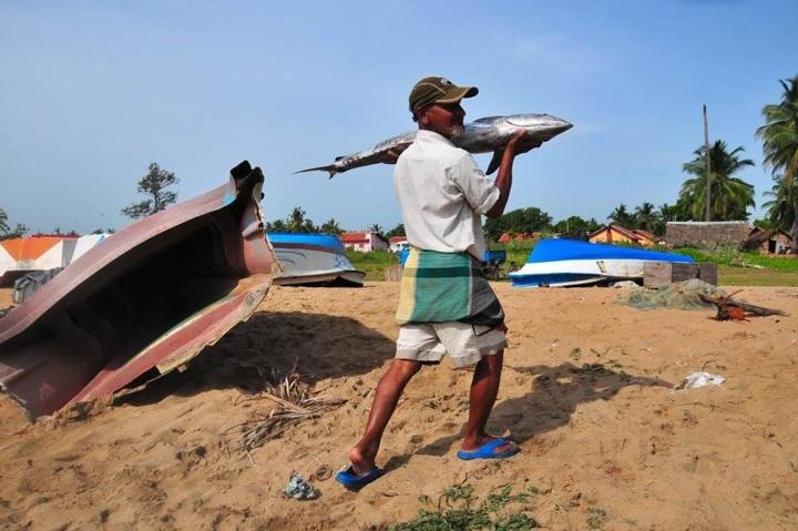 Warmer Indian Ocean Could Be 'Ecological Desert'