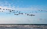 Climate Change Is Driving Birds to Migrate Early