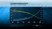 Ocean Acidification: More CO2 = More Acidic