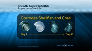 Ocean Acidification: Impacts on Sea Life