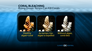 Rising Ocean Temperatures Can Kill Corals