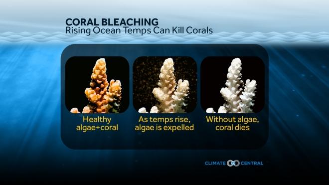 Rising Ocean Temperatures Can Kill Corals