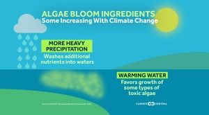 Algae Blooms and Climate Change