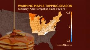 Warming Maple Tapping Season