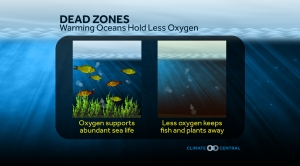 Dead Zones: Warming Oceans Hold Less Oxygen