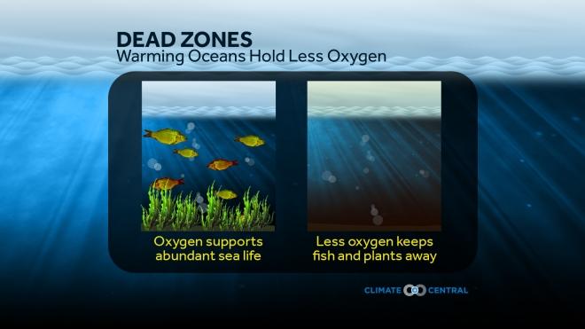 Dead Zones: Warming Oceans Hold Less Oxygen
