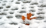 More Rain, Less Snow for U.S. Winters
