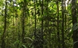 Rainforests May Store Less Carbon As Climate Changes