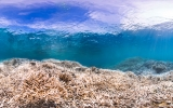 Longest Global Coral Bleaching On Record Isn't Over Yet