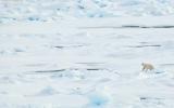 Arctic Sea Ice Hits Record Low Winter Peak