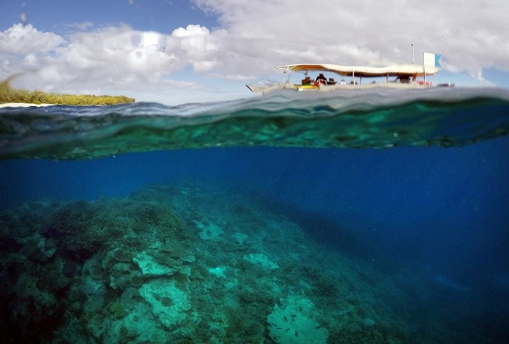 Reef 'fried' by bleaching event: scientist
