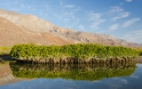 These Tiny Mangroves Hold Vast Stores of Carbon