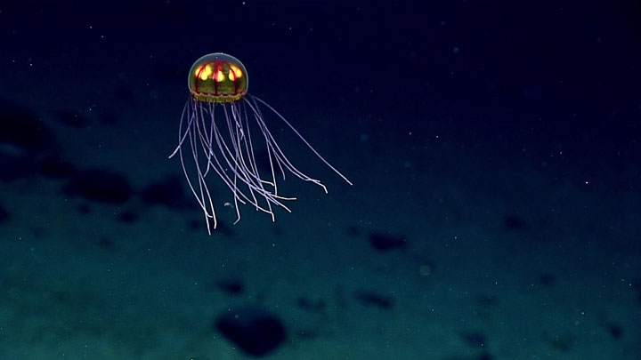 deep sea life faces dark future with warming climate central