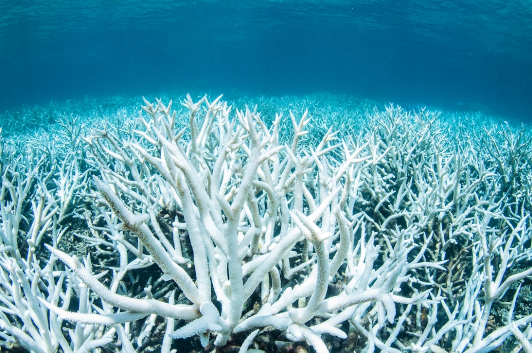 climate change coral bleaching and the For only the third time on record, a global coral bleaching event is unfolding and climate change is to blame.