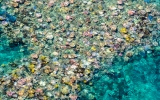 Loss of Coral Reefs Could Cost $1 Trillion Globally
