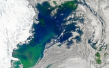 Blooming Algae Could Accelerate Arctic Warming