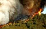 California's Forests Have Become Climate Polluters