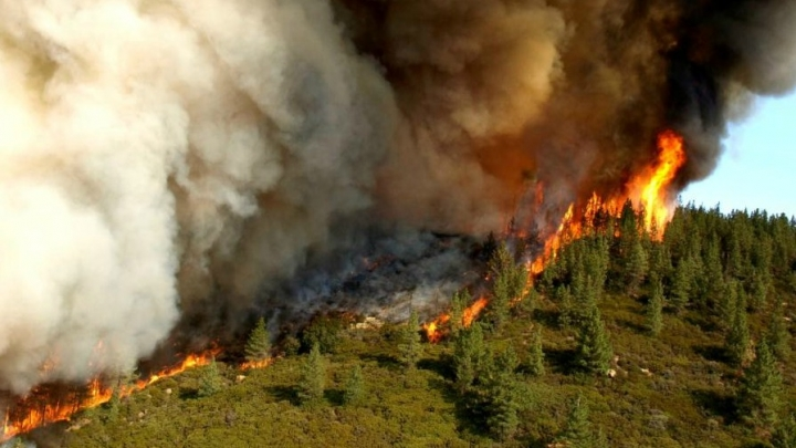 California's Forests Have Become Climate Polluters ...