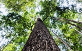 Climate Pact Sees the Forest and the Trees