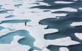 Thinning Arctic Sea Ice Prompts Algae Bloom Study