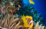 Fishing Bans Can Protect Great Barrier Reef Corals