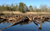 Sea Level Rise Could Help Marshes Ease Flooding