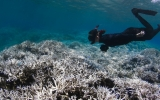 Coral Deaths Threaten Coasts With Erosion, Flooding