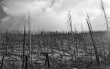 Image of the Day: Fires Will Likely Finish Off Forests