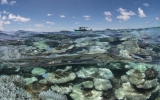 Global Coral Bleaching Continues For a Record Third Year