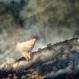 Climate Change is Tipping Scales Toward More Wildfires