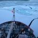 Rapidly Acidifying Arctic Ocean Threatens Species