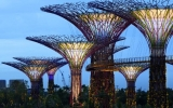 Image of the Day: 'Supertrees' Super Useful in Singapore