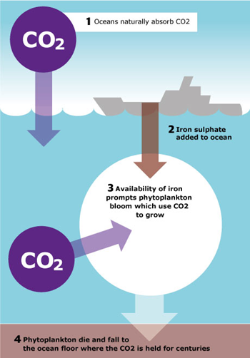 Dumping Iron At Sea Can Bury Carbon For Centuries