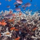 Local Efforts to Save Coral Reefs May Be Futile