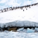 Antarctic Peninsula Has Cooled, but Warming Will Win